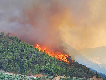 Grecia en estado de emergencia por una ola de incendios forestales