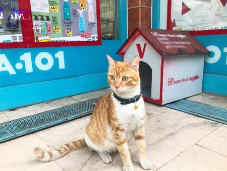 Un supermercado turco contrata a la gata que se hizo famosa en Internet