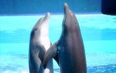 Llegan a Estambul los shows de delfines