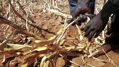 La FAO advierte de una nueva crisis mundial de alimentos