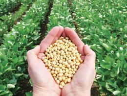 Alimentacion agricultura