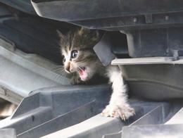 Antalya gato gatito coche
