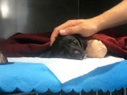 Sakarya cachorro perro mutilado