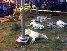 Ankara perros muertos veneno