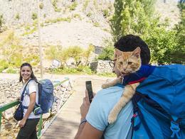 Artvin pareja turca gato