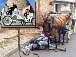 Estambul islas principes caballos coches electricos