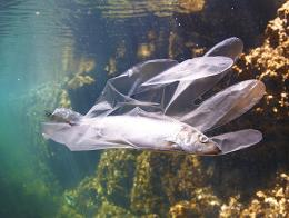 Medioambiente contaminacion mar pez plastico