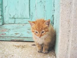 Turquia gato calle