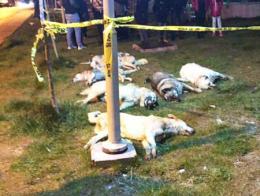 Ankara perros envenenados