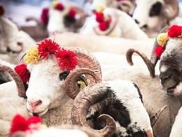 Turquia fiesta sacrificio(1)