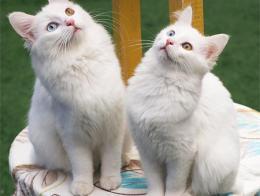 Van gatos cuidado musica