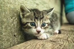 Gato gatito asustado