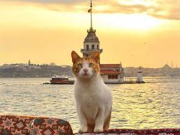 Un gato de Estambul frente a la Torre de la Doncella (Kız Kulesi) en el Bósforo