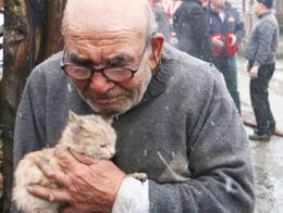 Bolu anciano gato incendio