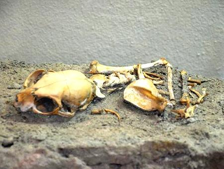 Estambul esqueleto gato constantinopla