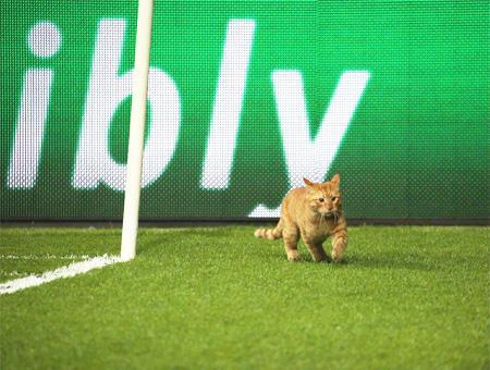La UEFA abre expediente al Beşiktaş por la ''invasión de campo'' de un gato