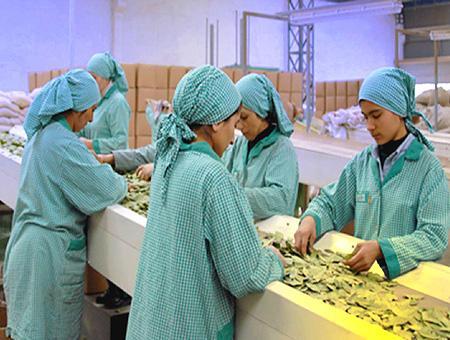 Mujeres empleo fabrica industria