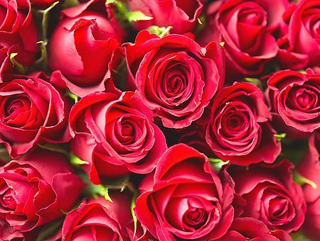 Flores rosas exportacion san valentin