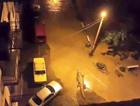 Georgia tiglis inundaciones cocodrilo
