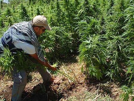 Policia turca marihuana