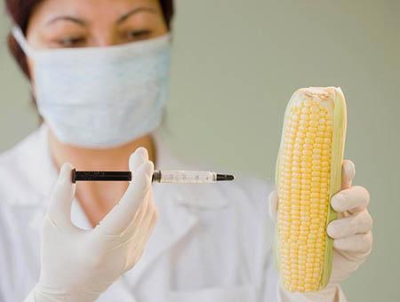 Alimentos transgenicos omg