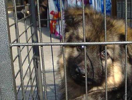 Perro jaula animales