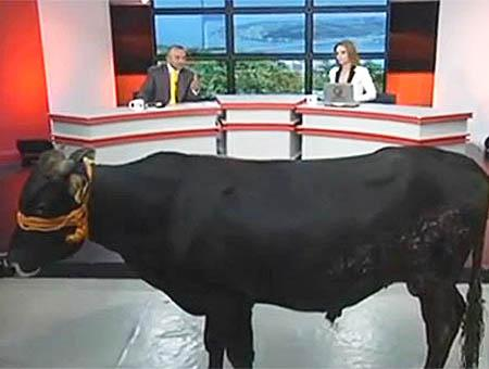 Toro entrevista kanalt