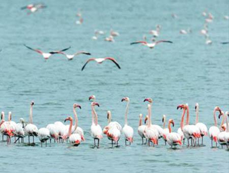 Flamencos lago tuz anatolia