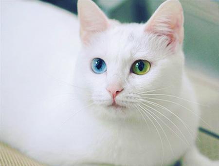 Gato van