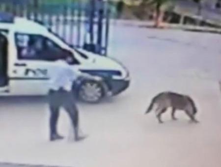 Imágenes del ex policía captadas el pasado mes de junio mientras dispara a un perro