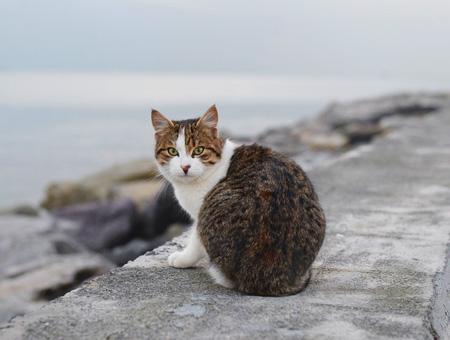 Gato callejero estambul