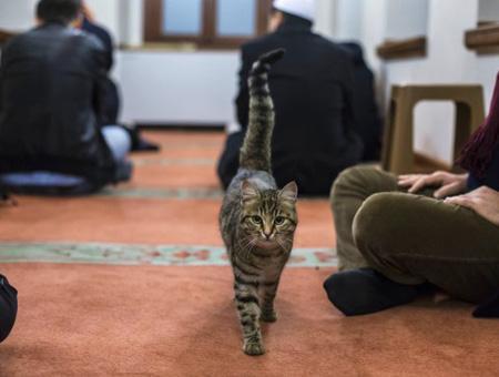 Gato mezquita turquia