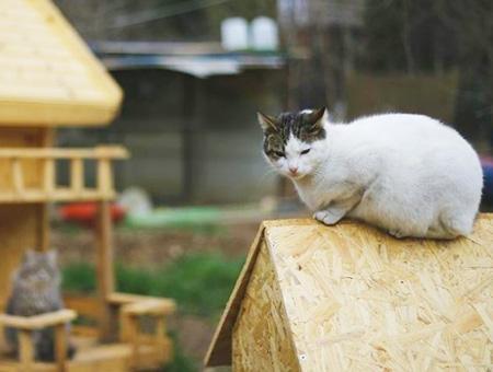 Antalya gatos animales