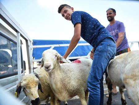 Musulmanes fiesta sacrificio ovejas