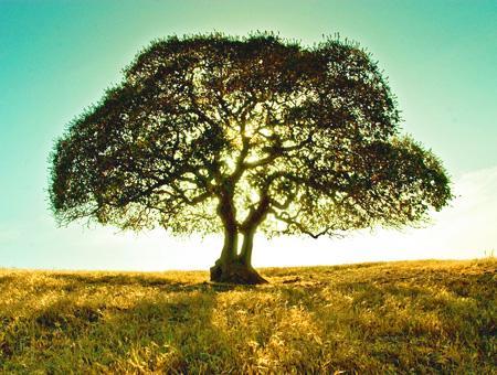 Naturaleza arbol pradera