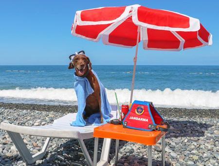 Artvin perro policia jubilacion playa