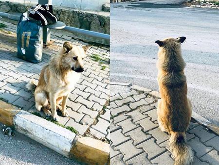 Mugla perro abandonado parada autobus