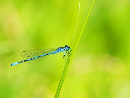 Naturaleza insecto libelula