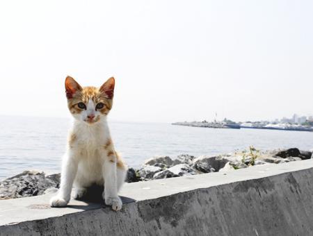 Estambul gato callejero