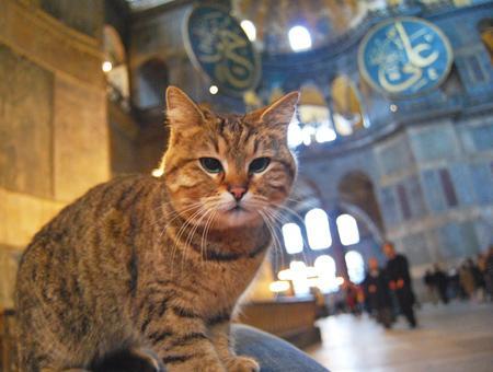 Estambul santa sofia gato