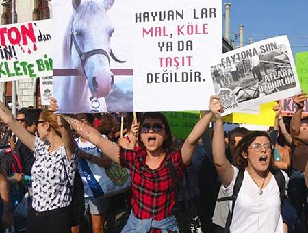 Estambul protesta caballos islas principes
