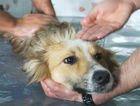 Estambul spa perros callejeros