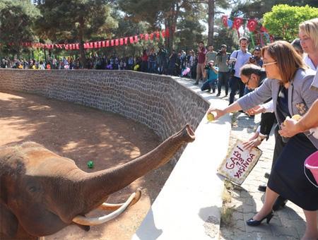 Gaziantep zoo elefante gabi