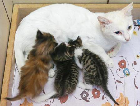 Van gata gatitos adoptados
