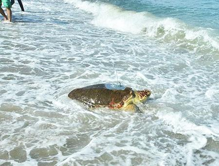 Chipre girne tortuga marina mar