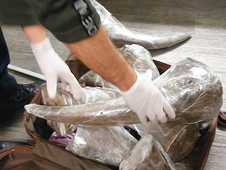 Estambul aeropuerto ataturk rinoceronte maletas