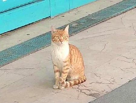 Estambul gata video viral