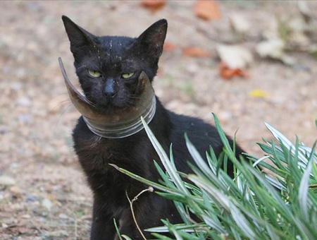 Hatay gato atascado rescate