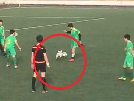 Kocaeli perro partido futbol