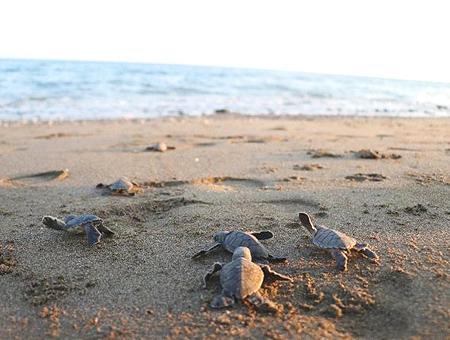 Mersin bebes tortuga playa